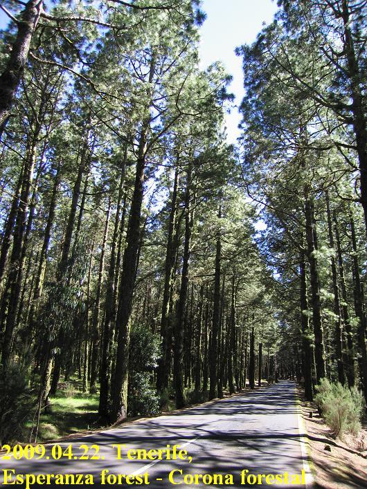 Esperanza forest / Corona Forestal